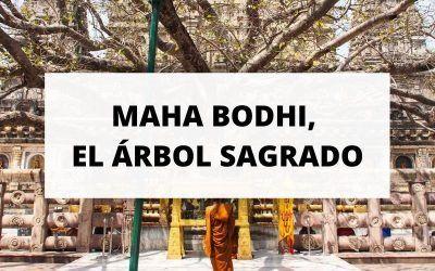 El árbol sagrado Maha Bodhi